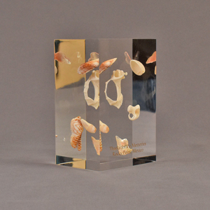 """Angle view of 3"""" x 4"""" x 6"""" rectangle block acrylic embedment award with sea shells cast into clear acrylic."""