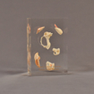 """Front view of 3"""" x 4"""" x 6"""" rectangle block acrylic embedment award with sea shells cast into clear acrylic."""