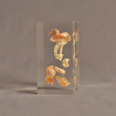 """Side view of 3"""" x 4"""" x 6"""" rectangle block acrylic embedment award with sea shells cast into clear acrylic."""